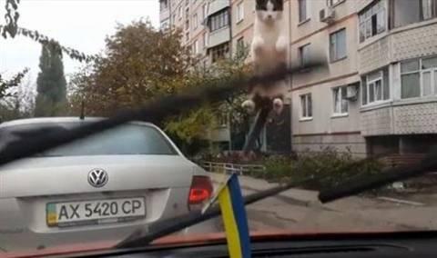 Το βίντεο που σαρώνει στο YouTube: Η περίεργεια... εκτόξευσε τη γάτα!