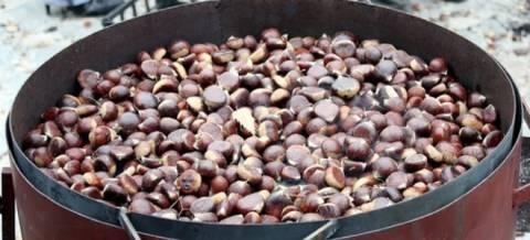 «Γιορτή Κάστανου 2013»: 550 τόνοι κάστανα ετησίως από το Πήλιο