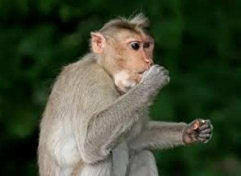 Βίντεο: Στο κυνήγι της μαϊμούς