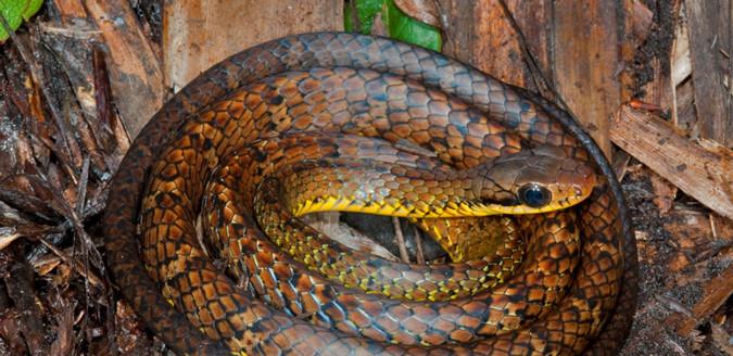 441 νέα είδη ζωής σε δάσος του Αμαζονίου