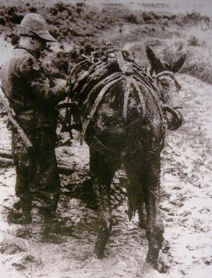 28η Οκτωβρίου 1940: Το χρονικό του πολέμου