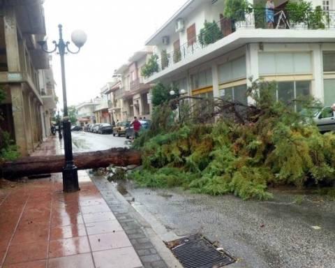 Δεκάδες πτώσεις δέντρων λόγω της κακοκαιρίας στην Αττική