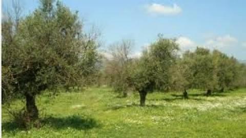 ΕΕ: Πακέτο στήριξης των ελληνικών γεωργικών προϊόντων