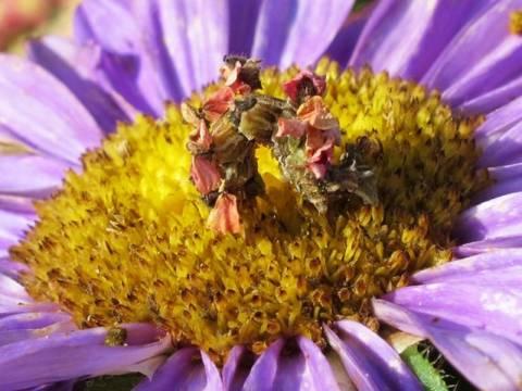 Δείτε την κάμπια που μοιάζει με λουλούδι (pics)