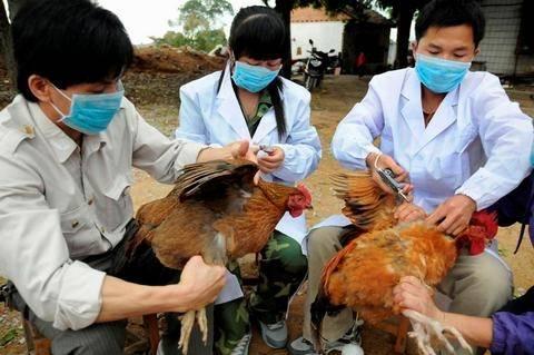 Πρώτη φορά ο ιός Η6Ν1 της γρίπης των πτηνών μόλυνε άνθρωπο