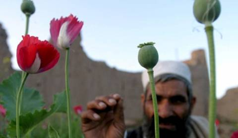 Ρεκόρ παραγωγής οπιούχου παπαρούνας στο Αφγανιστάν