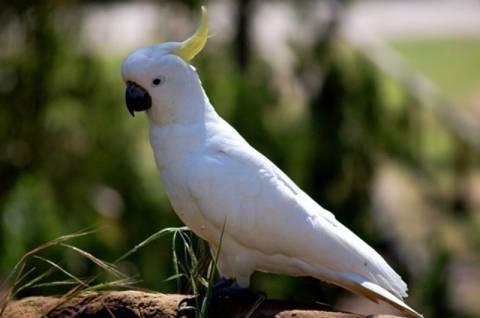 Παπαγάλος τραγουδά και χορεύει (vid)