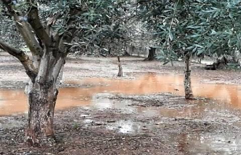 Χρυσοβέργι Αιτωλικού: Ζημιές σε ελαιοκαλλιέργειες από το χαλάζι