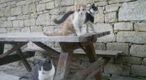 ΣΟΚ! Κρέμασαν νεκρό γάτο στα κάγκελα περίφραξης του ΡΙΚ