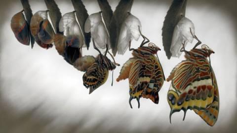 Μοναδικές εικόνες: Καρέ καρέ η «γέννηση» μιας πεταλούδας