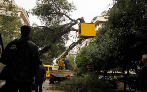 Διακοπή κυκλοφορίας σε δρόμους, λόγω της πτώσης δέντρων