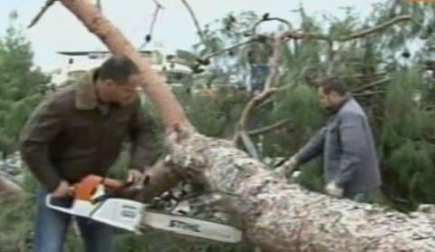 Πήραν τα σπασμένα δέντρα για… καυσόξυλα! (vid)