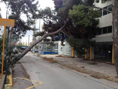 Χαλάνδρι: Δέντρο έπεσε πάνω στις γραμμές του τρόλεϊ (pics)