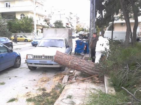 Μενίδι: Δένδρο καταπλάκωσε αυτοκίνητα (pics+vid)