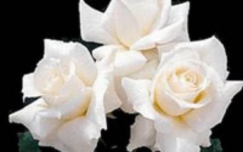 Θρήνος στη Ρόδο: Σήμερα η κηδεία της 27χρονης