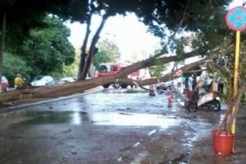 Έπεσαν δέντρα στην εθνική Πατρών - Πύργου