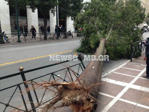 Πτώση δέντρου στη Σταδίου - Ένας τραυματίας (pics+vid)