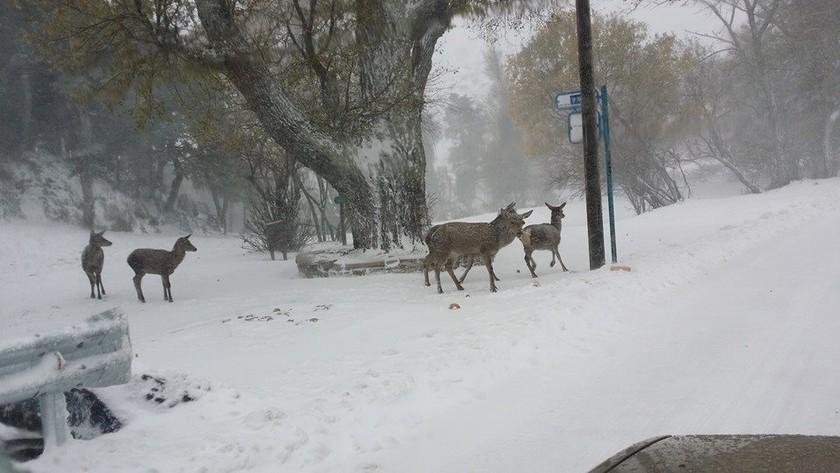 Μαγικές φωτογραφίες από την χιονισμένη Πάρνηθα!