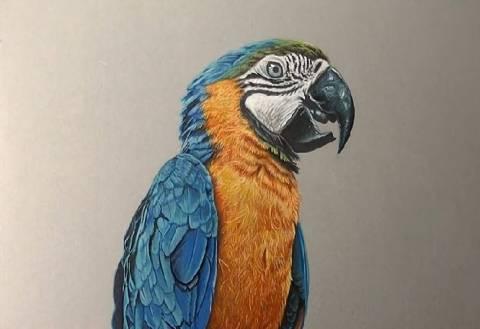 Αυτός ο παπαγάλος είναι απλά μια ζωγραφιά! (βίντεο)