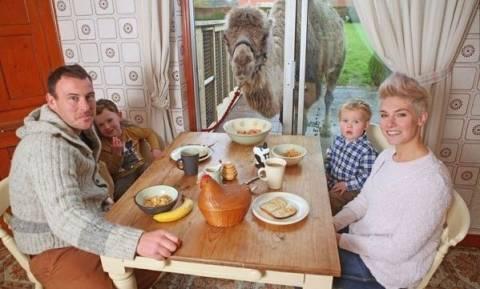 Απίστευτο: Οικογένεια τρώει το πρωινό της με μία καμήλα! (εικόνες)