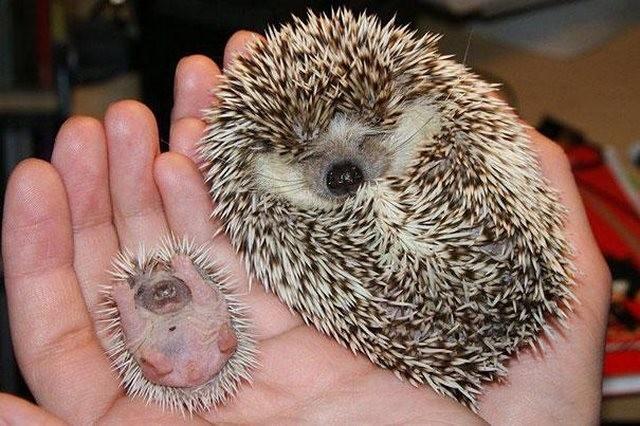 Χαριτωμένα ζωάκια φωτογραφίζονται με τη μαμά τους! (pics)