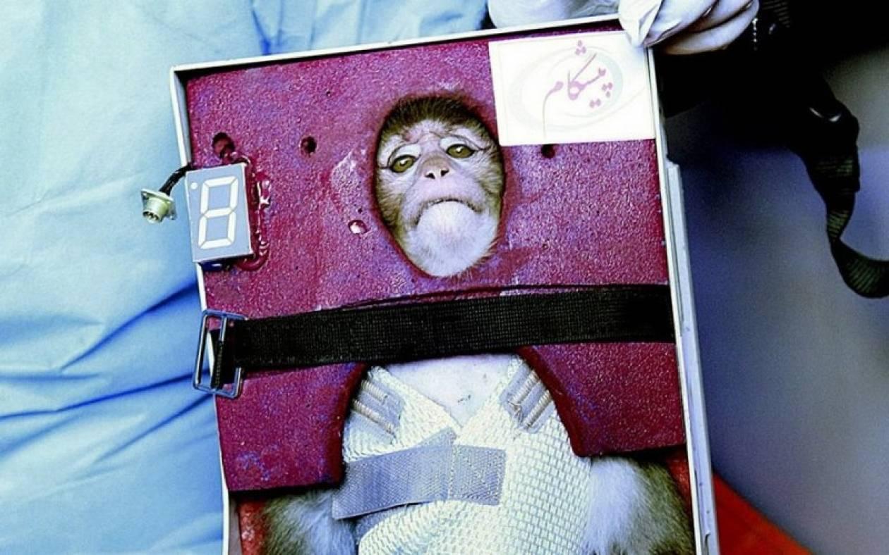 Δεύτερος πίθηκος στο διάστημα από την Τεχεράνη