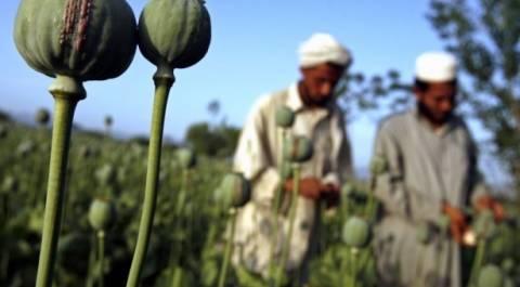 Ραγδαία αύξηση της παραγωγής οπίου