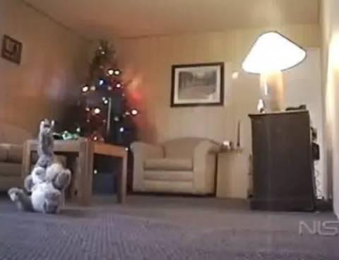 Προσοχή στα λαμπάκια του χριστουγεννιάτικου δέντρου (βίντεο)