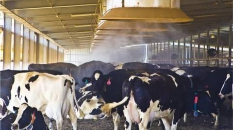 Έβαλε κλιματιστικά στη φάρμα για να κατεβάσουν οι αγελάδες... γάλα!