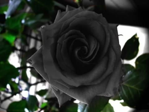 Halfeti: Το χωριουδάκι της Τουρκίας με τα μαύρα τριαντάφυλλα
