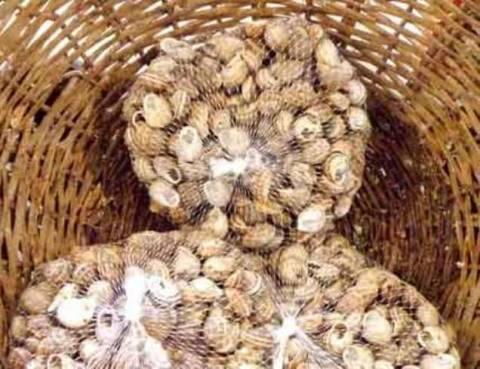 Κρήτη: Τους έπιασαν στα «πράσα» με 4 τσουβάλια...σαλιγκάρια!