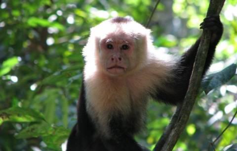Οι πίθηκοι αποφεύγουν τους... κακούς και εγωιστές ανθρώπους!