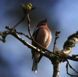 Βγείτε και ακούστε τα πουλιά: Δεν έχετε ιδέα πόσο καλό θα σας κάνει