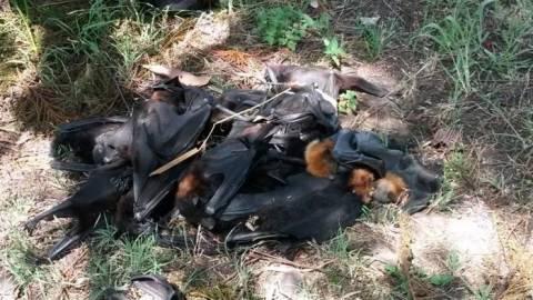 Έπαθαν ΣΟΚ όταν από τον ουρανό έπεσαν 100.000 νεκρές νυχτερίδες