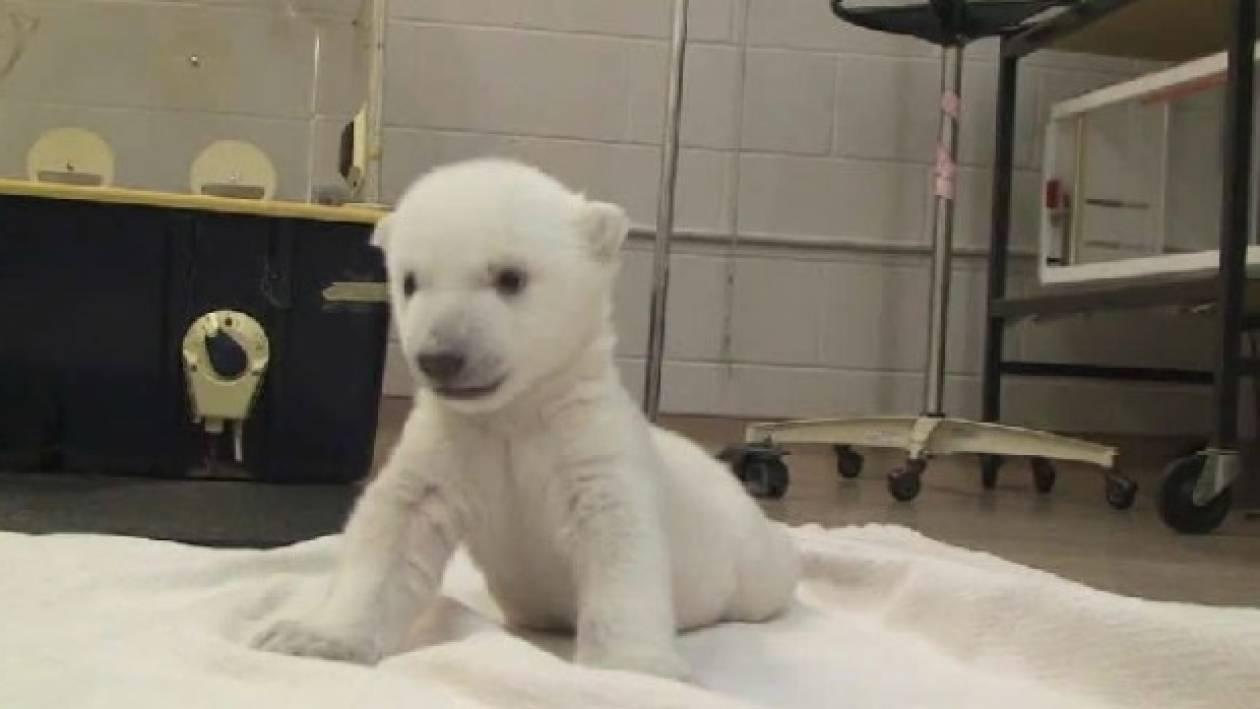 Βίντεο: Τα πρώτα βήματα ενός μικρού αρκούδου ξετρέλαναν το διαδίκτυο