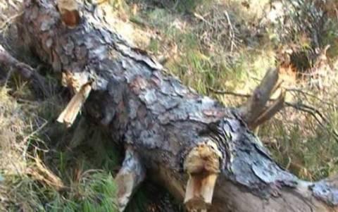 Καταστροφή στο Σέιχ Σου - Κόβουν τα δέντρα για να ζεσταθούν (vid)