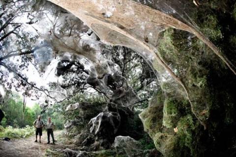 Το μυστήριο της γιγαντιαίας αράχνης του Κονγκό