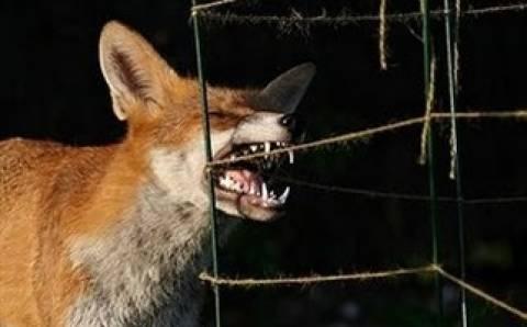 Ανησυχία από πέντε νέα κρούσματα λύσσας