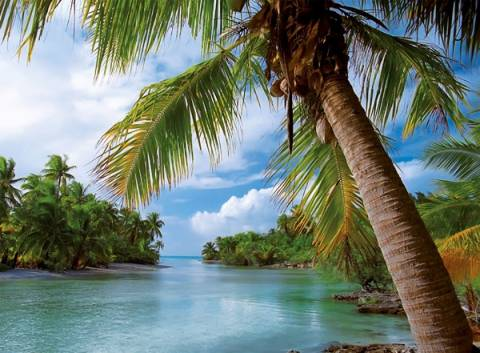 «Το έσκασαν» από το ορφανοτροφείο και βρέθηκαν στην Καραϊβική