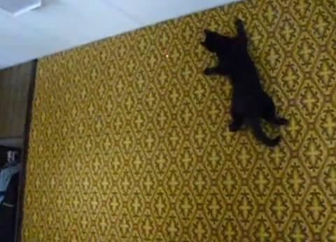 Η γάτα... «spiderman» που κυνηγάει το λέιζερ (βίντεο)