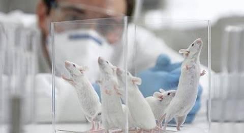 Πρόστιμο 150.000 ευρώ ημερησίως στην Ιταλία για in vivo πειράματα;