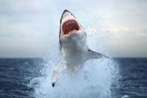 Πανικός στην Αυστραλία: Εμφανίστηκαν καρχαρίες σε παραλίες