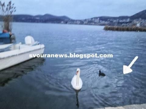 ΑΝΑΤΡΙΧΙΑΣΤΙΚΗ ΦΩΤΟ: Είδε γυναικείο πρόσωπο στη λίμνη της Καστοριάς