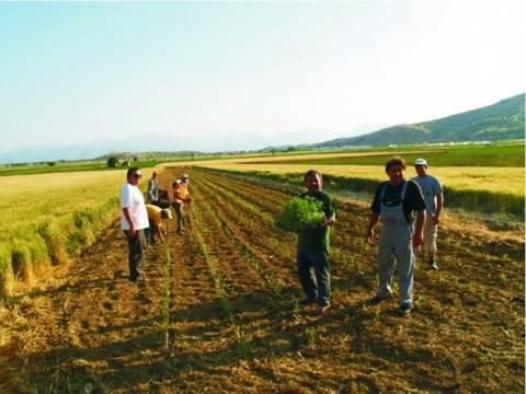 Πτυχίο πανεπιστημίου διαθέτουν τέσσερις στους δέκα αγρότες