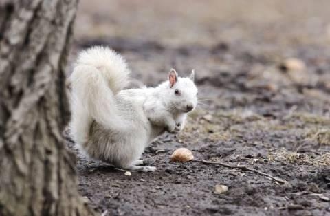 Σπάνια και ασυνήθιστα λευκά ζώα!