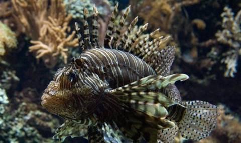 Τα πιο επικίνδυνα πλάσματα της θάλασσας!