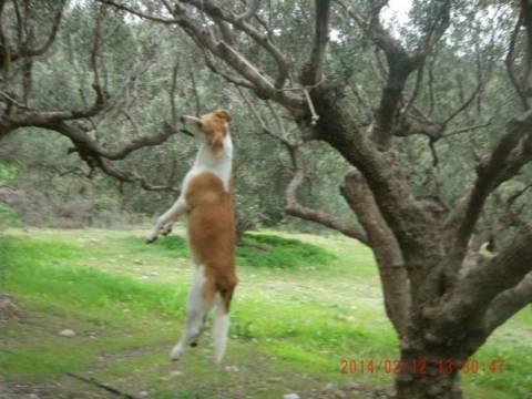 ΣΟΚ στη Σητεία: Κρέμασαν το ένα σκυλί και χτύπησαν θανάσιμα το άλλο
