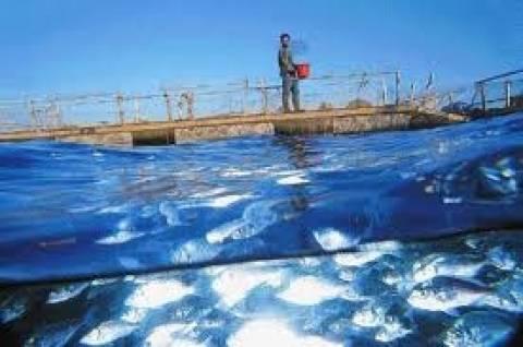 Επενδύσεις 36,5 εκατ. ευρώ στις υδατοκαλλιέργειες