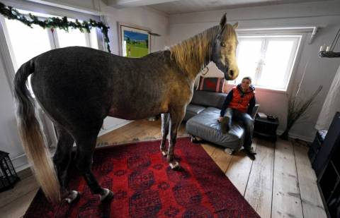 Άλογο «μετακόμισε» στο σπίτι του ιδιοκτήτη και τώρα δεν...φεύγει!