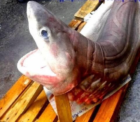 Καρχαρίας... στην αγορά της Καλλιθέας!